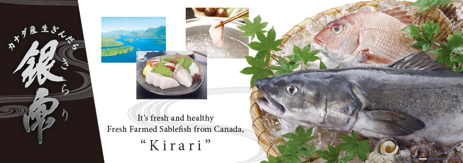 It's fresh and healthy Fresh Farmed Sablefish from Canada, Kirari
